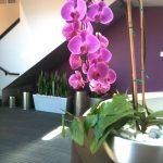 Office Interior Plant Service
