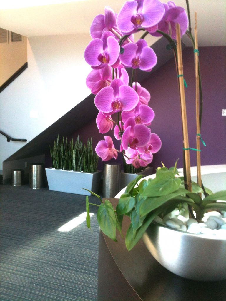 commercial Interior Plant Service
