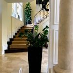 residential commercial Interior Plant Service